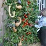 prepper garden